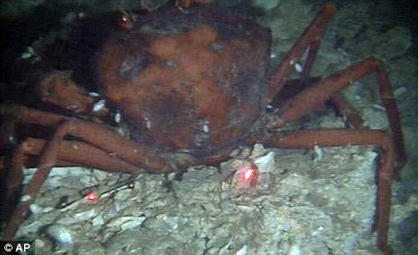 [Image: Crab.GulfDead.jpg]