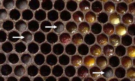 [Image: Honey-and-bee--Entombed-P-007.jpg]